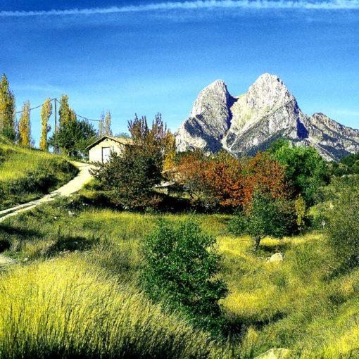 Pyrenees
